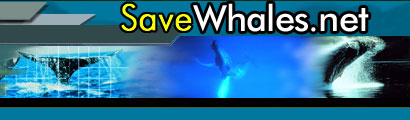 Help to save the whale for free!!